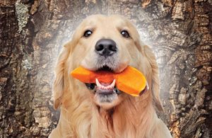 New pet food product launches bounce back, focus on health