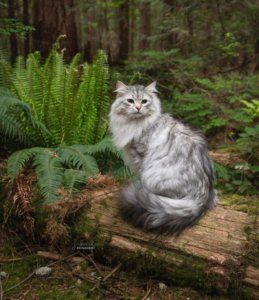 These Adventure Cats Have Tips On How To Make Outdoor Fun Possible For You & Your Cat