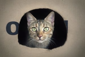 CattyCorner: Why Do Cats Like Boxes And Tape Squares?