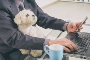Higher online demand for pet food continuing in 2021