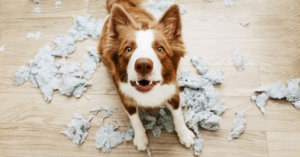 Ask Dr. Jenn: How Do I Train my Covid Puppy to be Alone?