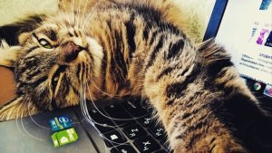 Research Shows Cats Have 5 Major Personality Types