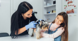 Tips for Pets Afraid of the Vet