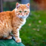 Cats and their Ancestral Instincts