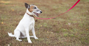How to Train a Dog the Basics: Sit, Stay, Come