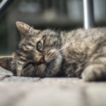 Letting a Beloved Pet Go: How Will I Know When It's Time?