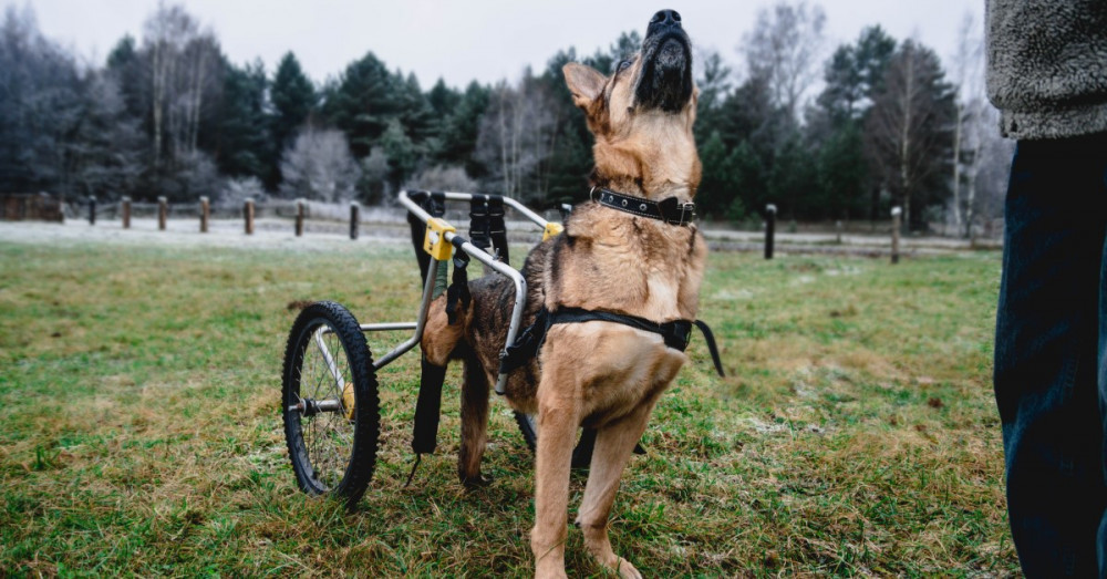 Adopting a Special Needs Pet: What You Need to Know