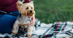 Hypoallergenic Dogs: What Breeds Won't Make You Sneeze