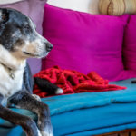 Ask Dr. Jenn: Does my Dog have Dementia?