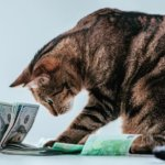 Which US pet owners spend the most on pet food?