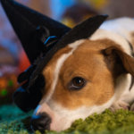 8 Scary Halloween Dangers for Pets